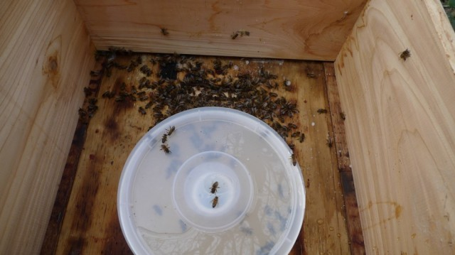 Dead bees in feeder
