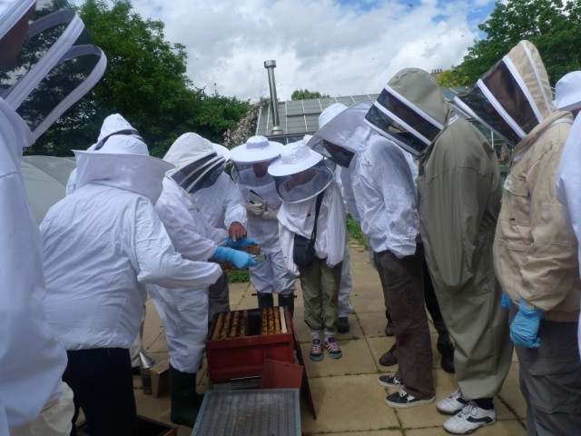 A NBU training session for London beekeepers