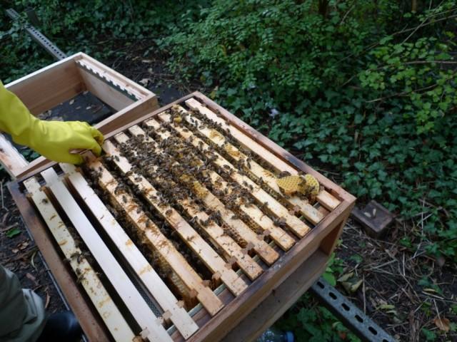 Lavender's hive