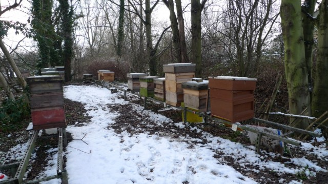 Ealing apiary in the snow
