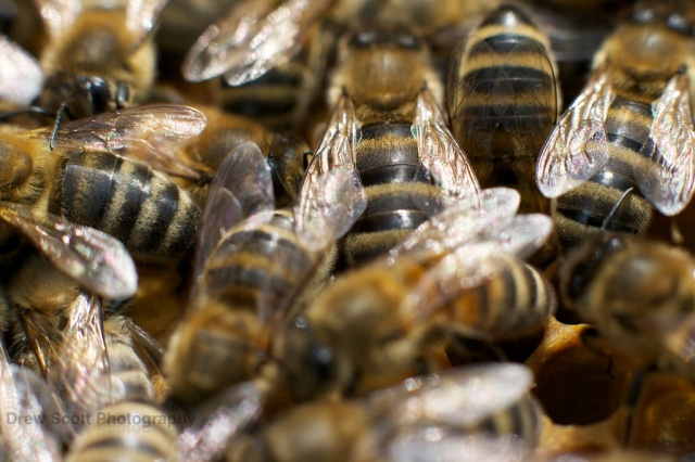 The world of bees: the colony is in constant communication