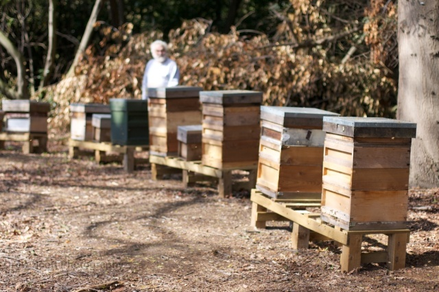 John and Osterley hives
