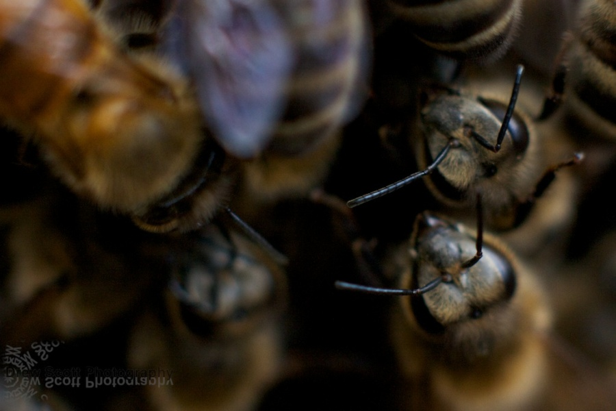 Hello bees!