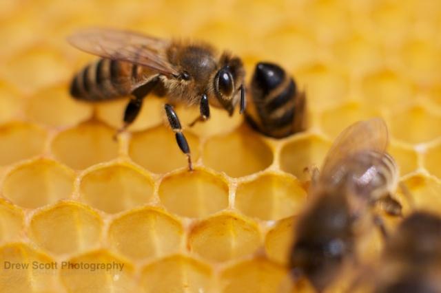 A bee bum.
