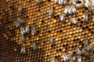 Pollencolours