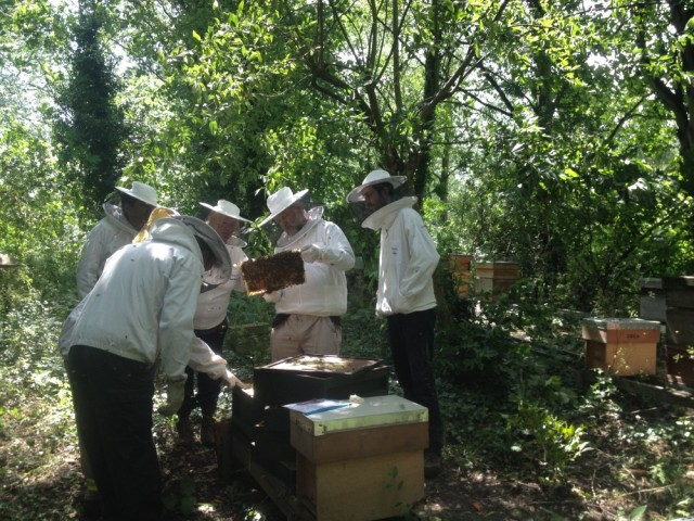 Urban beekeepers - are there too many of us?