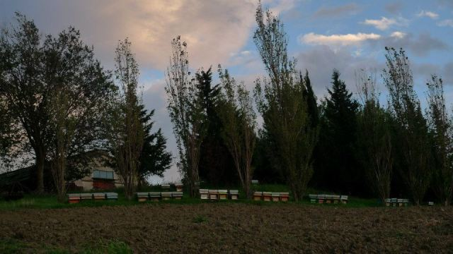 Long distance Italian beehives