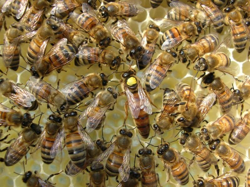queen bee - photo #29