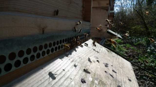 Flying bees, 6th April