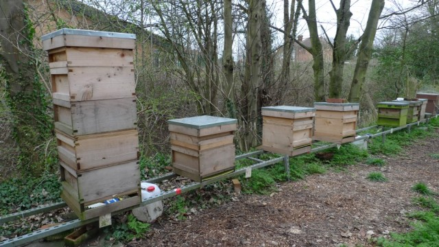 Our hives