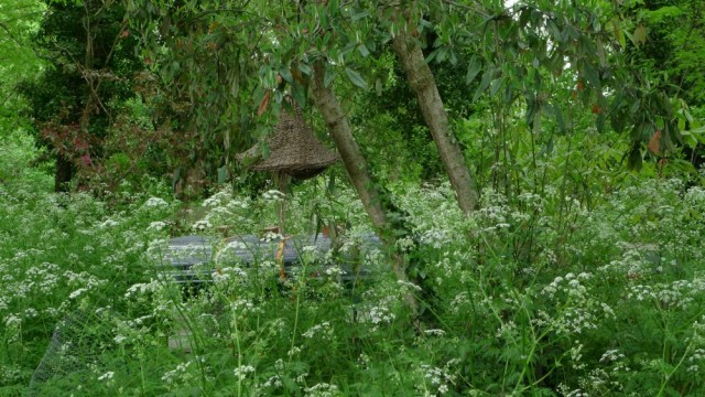 Weeds in the apiary