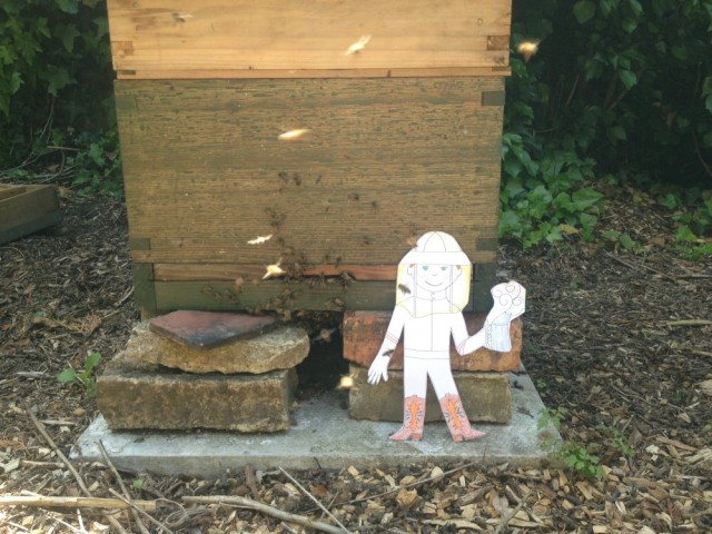 Flat Stanley at my hive