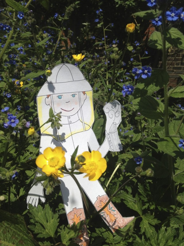 Flat Stanley in buttercups