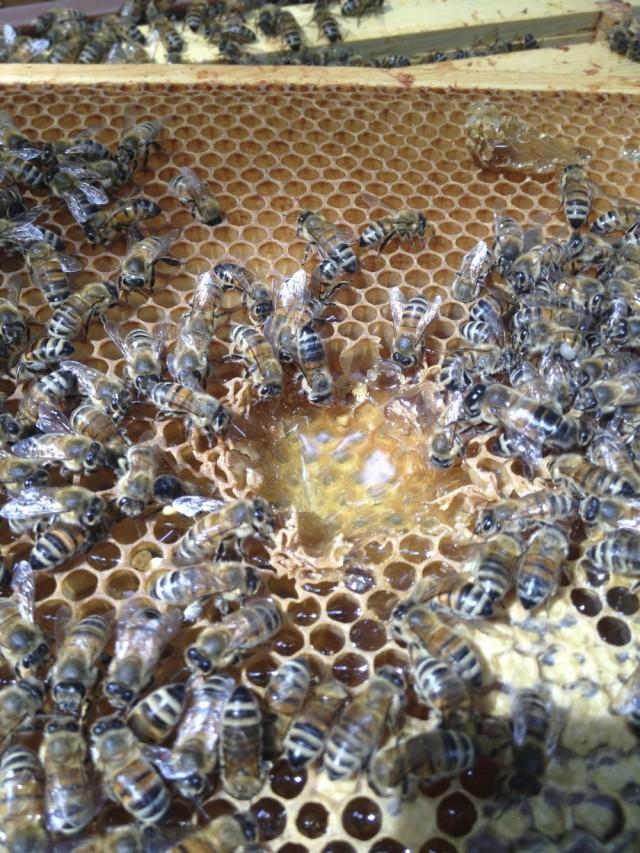 Honey scramble