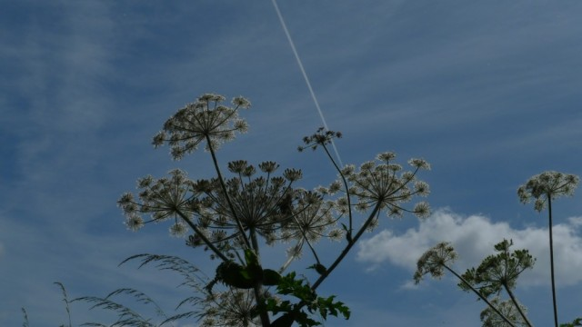 Flowers against sky