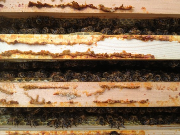 Bees on super frames