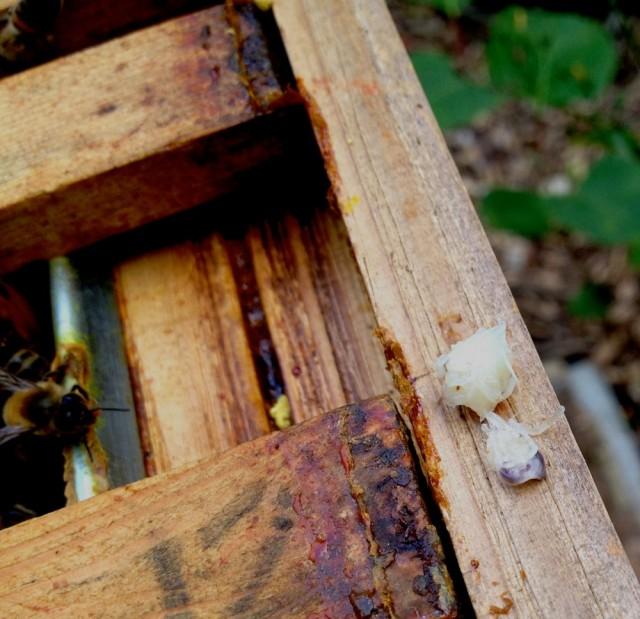 Dead larvae