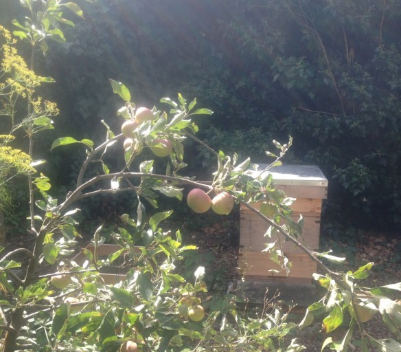 Apples in front of bee hive