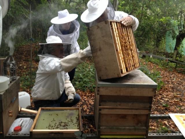 John Chapple inspecting Albert's hive