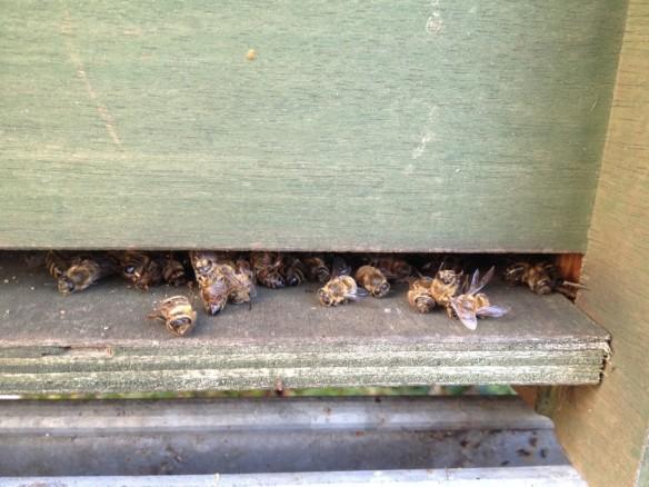 Dead nucleus bees