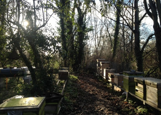 Apiary winter 2013/14