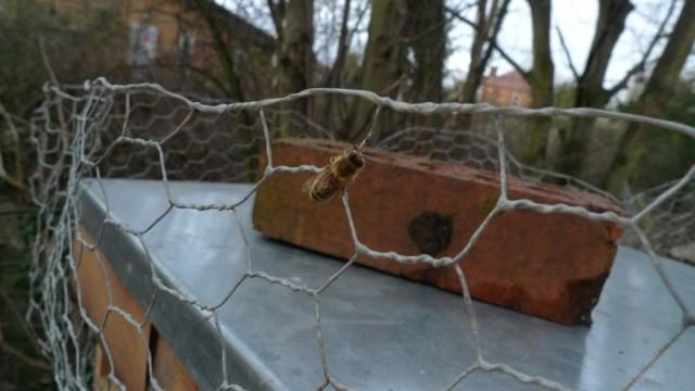 Bee on chicken wire