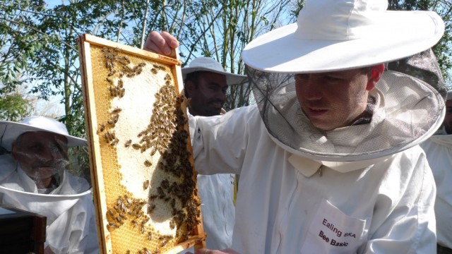 Looking at beautiful capped honey