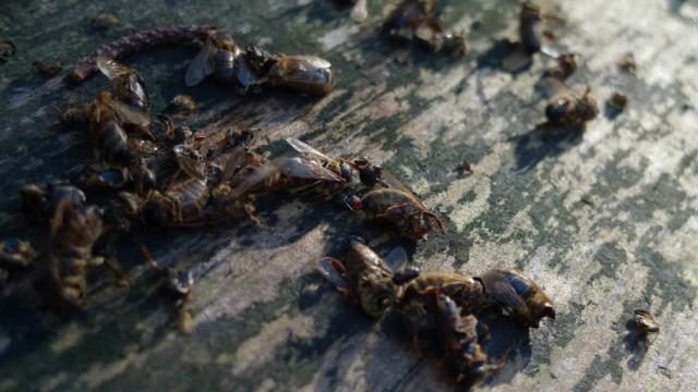 Headless bees