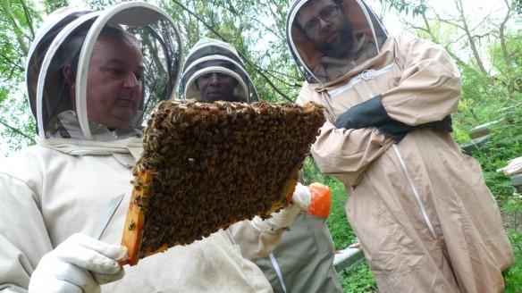 Tom inspecting Ken's hive