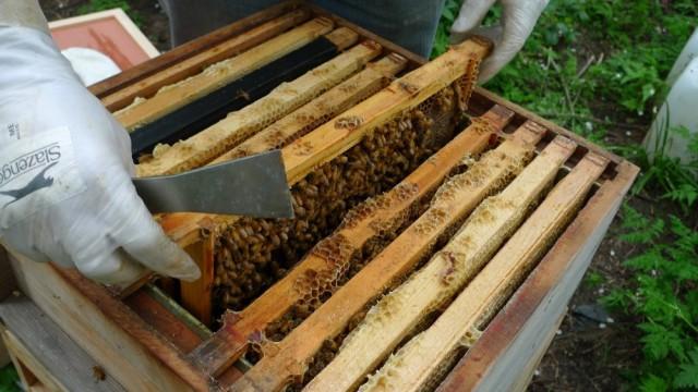 Sluggish bees