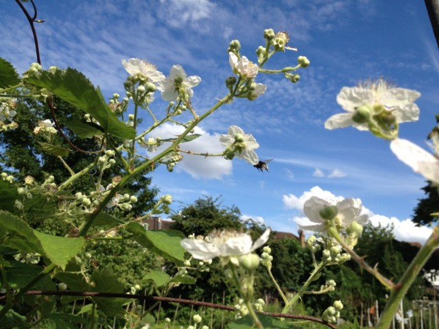 Bramble flowers against the sky