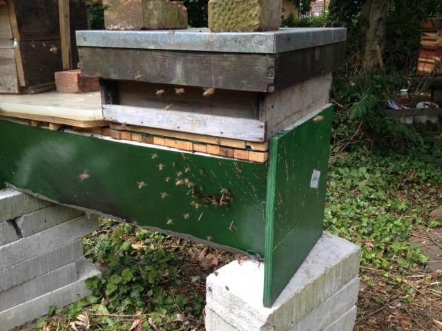 Brian's hive