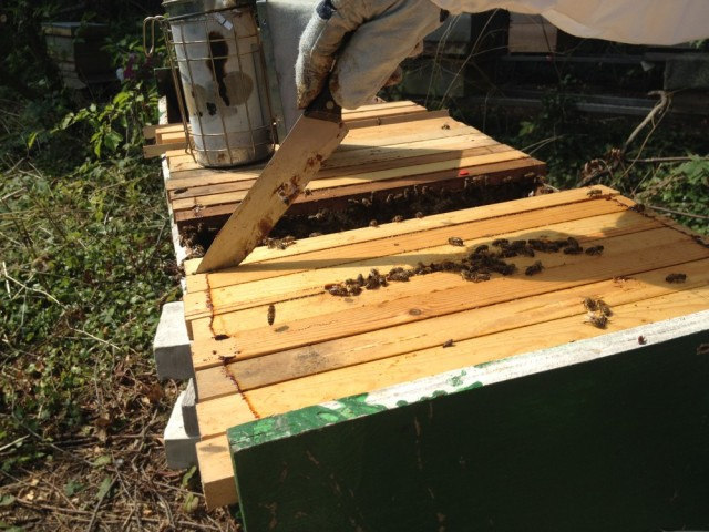 Brian cutting into his top bar hive