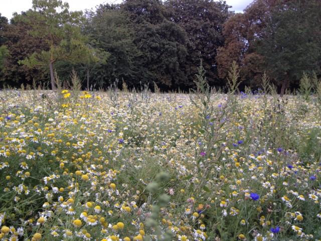 Wildflowers, Walpole Park