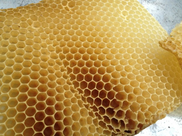 Empty honey comb