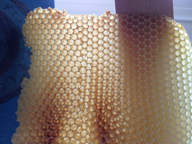 Honeycomb held up to the light