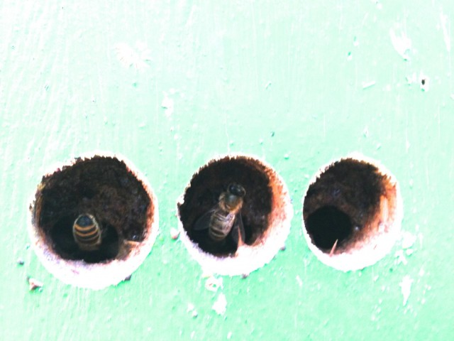 Propolis holes