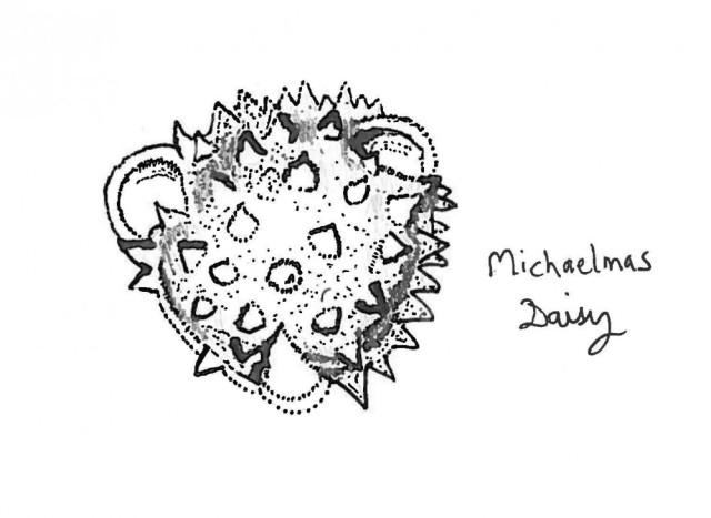 Michaelmas daisy pollen