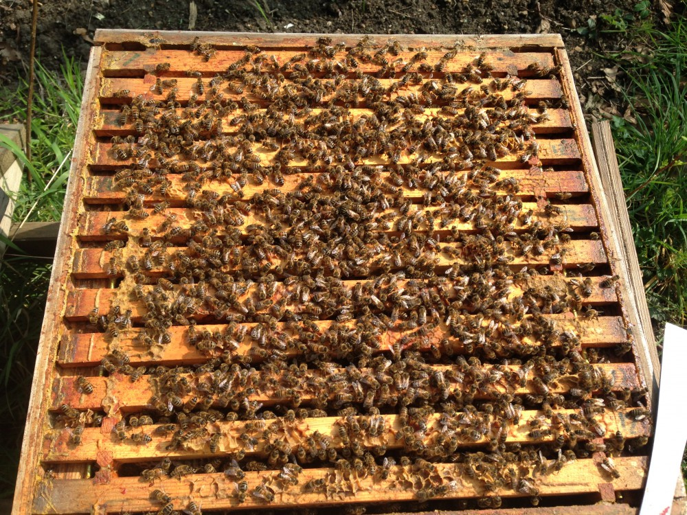 A box full of bees | Adventuresinbeeland\'s Blog