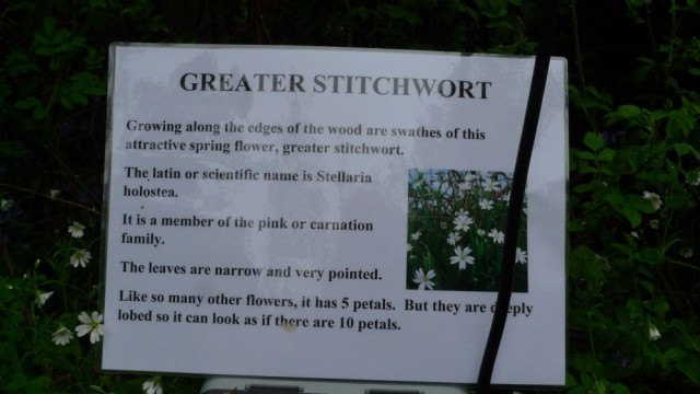 Greater stitchwort sign, Perivale wood