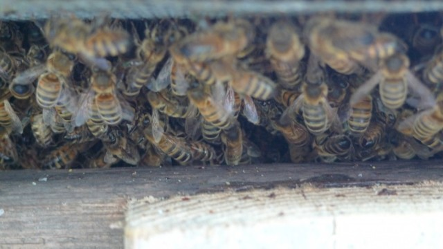 Bees clustering under hive 3