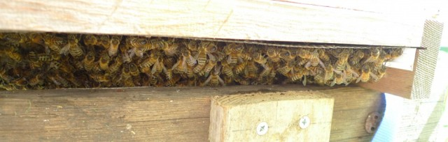 Bees clustering under hive 2