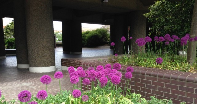 Alliums at Southbank centre
