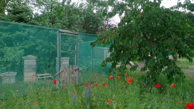 Allotment apiary