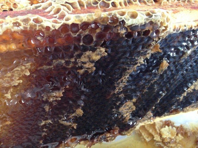 Allotment honey uncapped