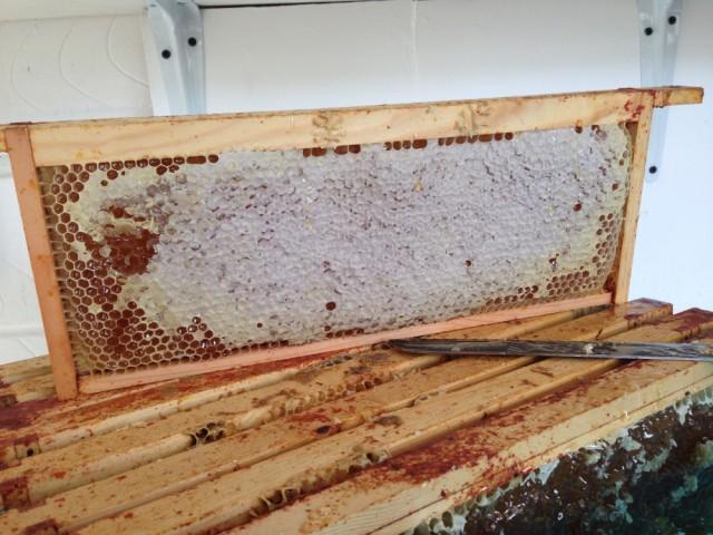 Honey frame before uncapping