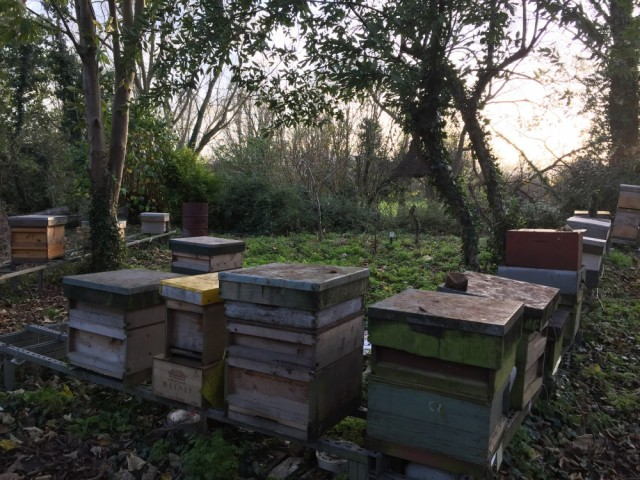 Apiary in November sunshine