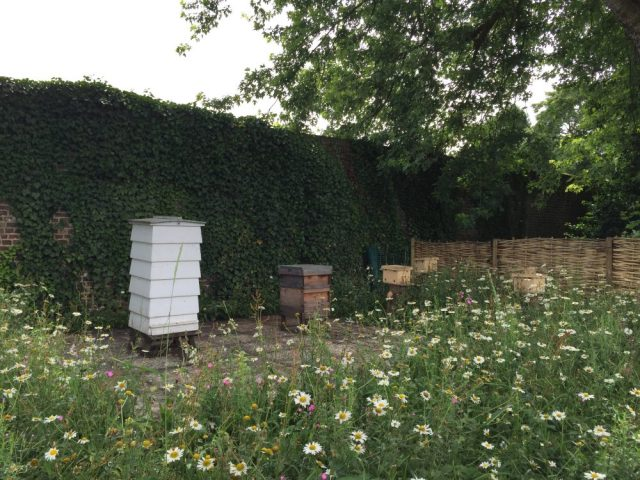 Hives at Kew