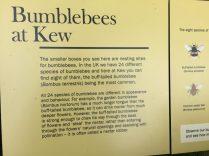 Bumblebees at Kew