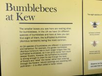 Bumblebees at Kew